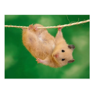 Carte Postale hampster idiot