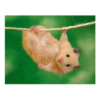 Carte Postale Hamster mignon