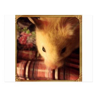 Carte Postale Hamster syrien mignon