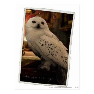 Carte Postale Hedwig 3