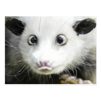 Carte Postale Heidi l'opossum observé par croix