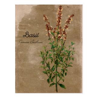 Carte Postale Herbe vintage de Basil de style