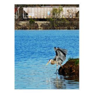Carte Postale Héron de grand bleu