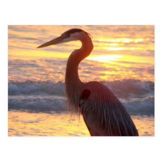 Carte Postale Héron de grand bleu au coucher du soleil