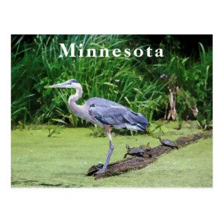 Carte Postale Héron de grand bleu avec des tortues et un lac