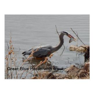 Carte Postale héron de grand bleu avec la truite