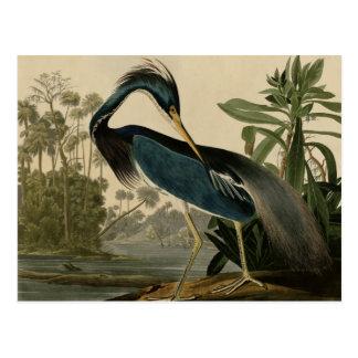 Carte Postale Héron de la Louisiane