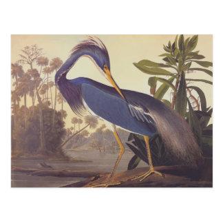 Carte Postale Héron de la Louisiane d'Audubon ou héron de