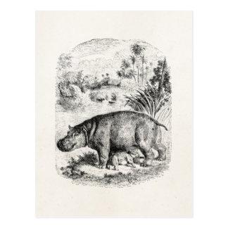 Carte Postale Hippopotames vintages de bébé de soins