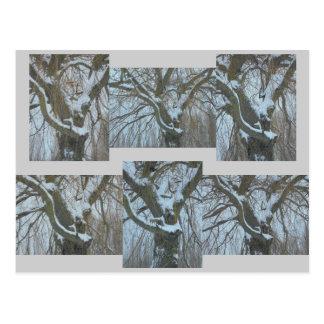 Carte Postale Histoire d'arbre. Sous la neige