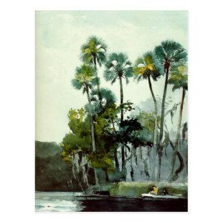 Carte Postale Homer - rivière de Homosassa