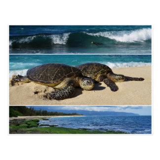 Carte Postale Honu, tortue de mer verte hawaïenne, Oahu, rivage