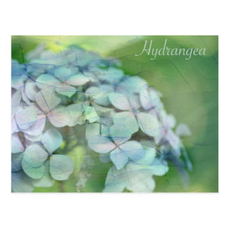 Carte Postale Hortensia