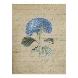 Carte Postale Hortensia bleu vintage avec la calligraphie