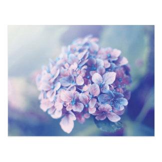 Carte Postale Hortensia de lavande