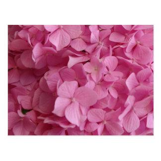 Carte Postale Hortensia rose