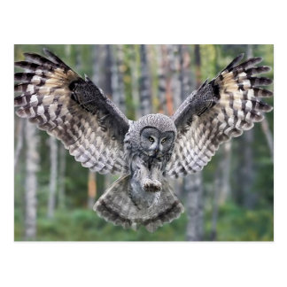 Carte Postale Hunting Great grey owl