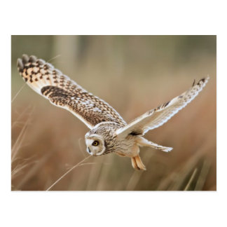 Carte Postale Hunting Owl