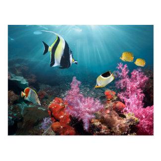 Carte Postale Idole maure du paysage | de récif coralien