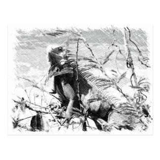 Carte Postale Iguane