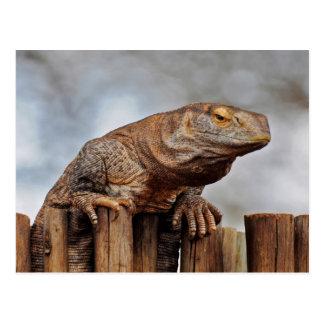 Carte Postale Iguane de Brown sur la barrière