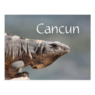 Carte Postale Iguane de Cancun Mexique