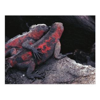 Carte Postale Iguane de Galapagos