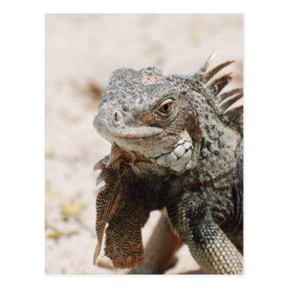 Carte Postale Iguane gris