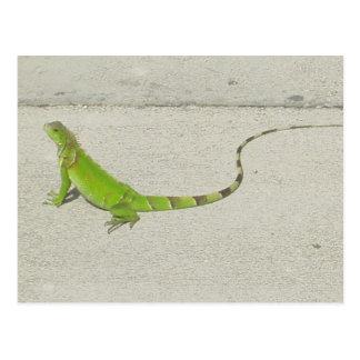 Carte Postale Iguane sauvage