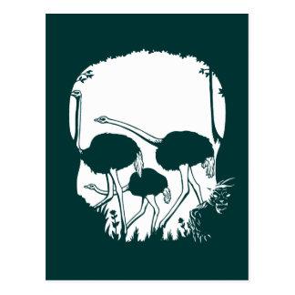 Carte Postale Illusion de crâne d'autruche