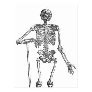 Carte Postale Illustration squelettique de creusement