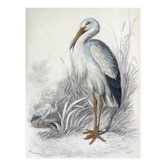 Carte Postale Illustration vintage d'oiseau de cigogne blanche