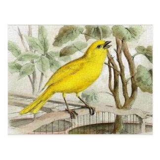 Carte Postale Illustration vintage jaune canari