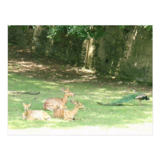 Carte Postale Image de zoo de Bronx