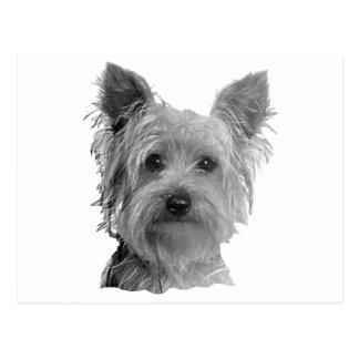 Carte Postale Image stylisée de Yorkshire Terrier