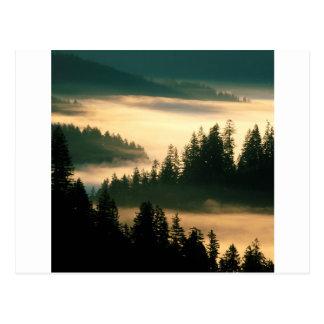 Carte Postale Indien Siuslaw de forêt