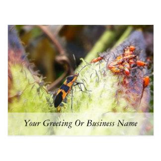 Carte Postale Insecte de Milkweed et bébés - Oncopeltus
