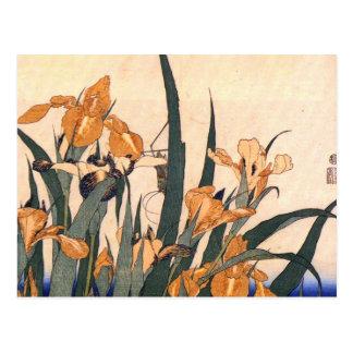 Carte Postale Iris japonais vintage