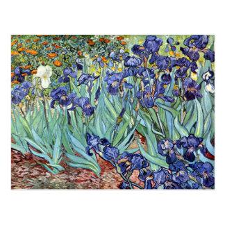 Carte Postale Iris par Vincent van Gogh 1898