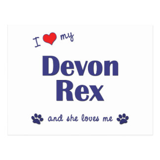 Carte Postale J'aime mon Devon Rex (le chat femelle)