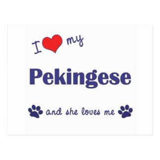 Carte Postale J'aime mon Pekingese (le chien femelle)