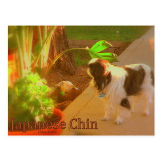 Carte Postale Japonais Chin