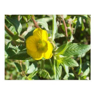 Carte postale jaune de fleur sauvage