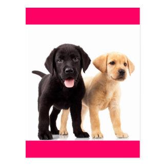 Carte postale jaune et noire de chiot de labrador
