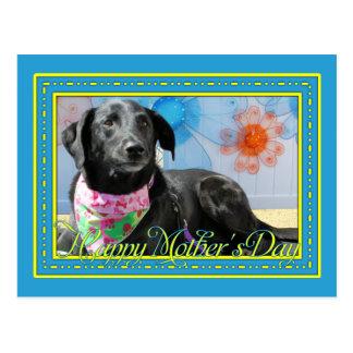 Carte Postale Jessie - Labrador noir