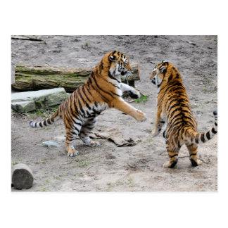 Carte Postale Jeu de tigres