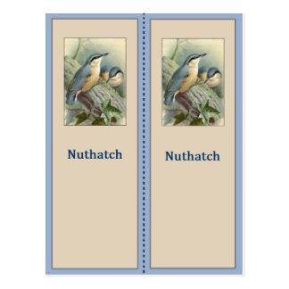 Carte Postale Joli signet d'oiseau de sittelle
