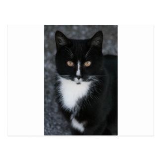 Carte Postale Joli smoking Kitty de garçon