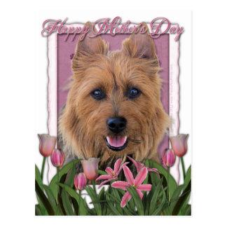 Carte Postale Jour de mères - tulipes roses - Terrier australien