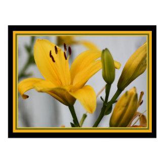 Carte Postale Jour jaune Lillies